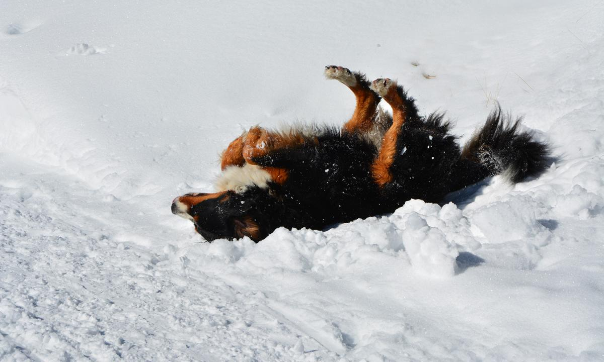 The joys of being a dog in the snows of South Tyrol